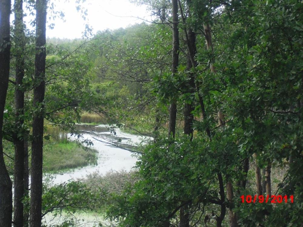 Вид на речку Белизна в Дубровсом районе